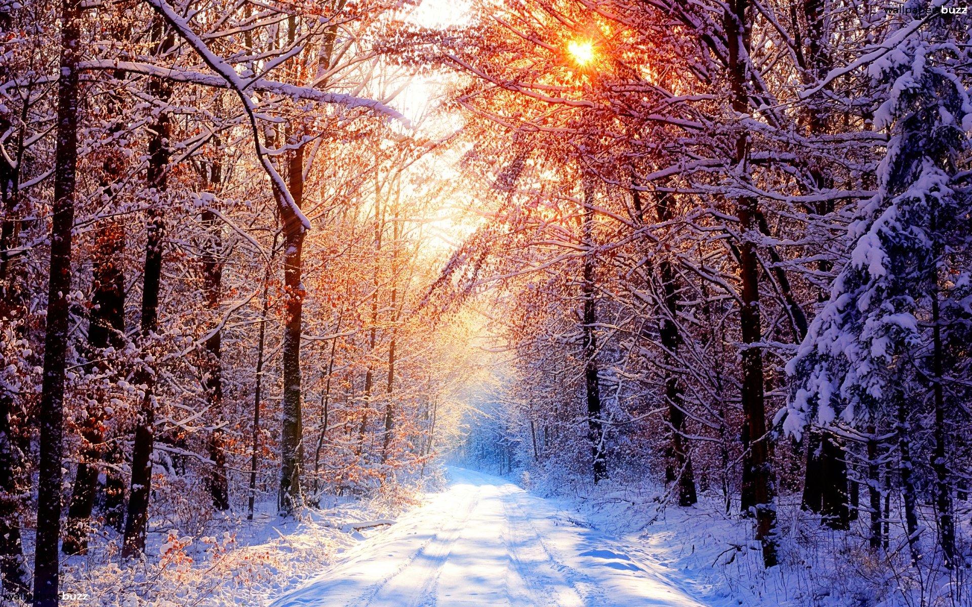 III Zimowy Półmaraton / III Zimowy Ćwierćmaraton